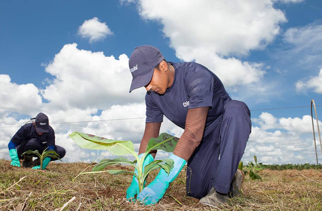 Chiquita kondigt een nieuw bijgewerkt duurzaamheidsrapport aan