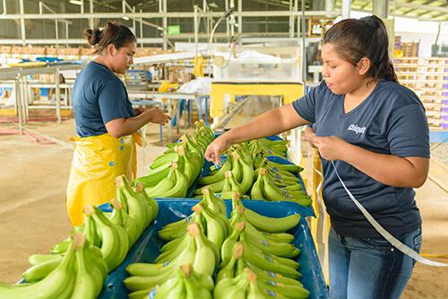 Chiquita gaat de uitdaging aan om vrouwen te emanciperen - 3