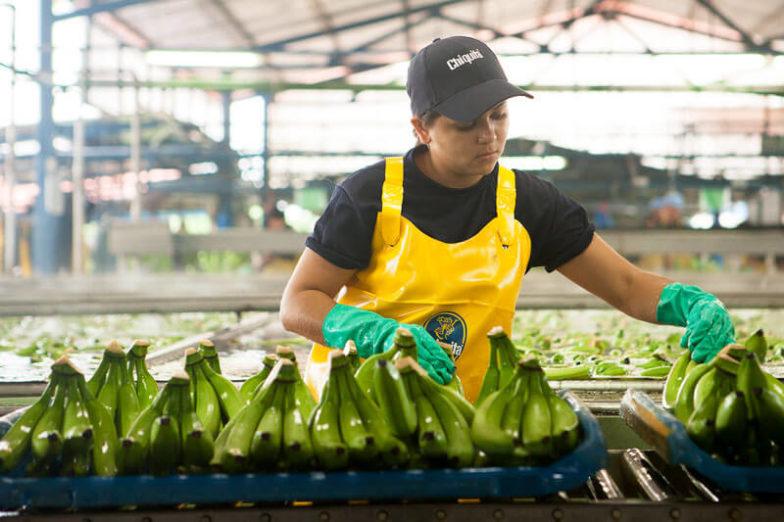 Het beheer van de watervoetafdruk op plantages van Chiquita levert per jaar een besparing van 1,8 miljard liter water op - 1