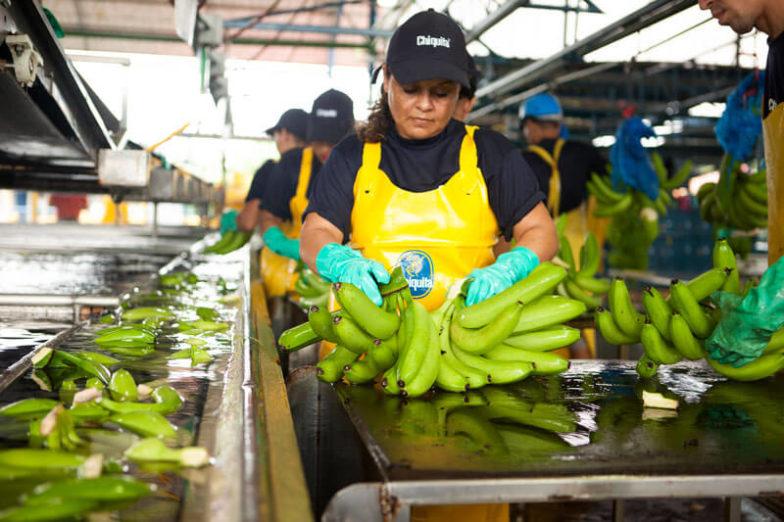 Het beheer van de watervoetafdruk op plantages van Chiquita levert per jaar een besparing van 1,8 miljard liter water op - 3