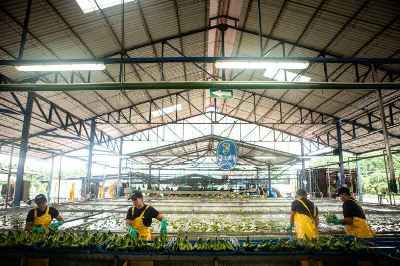 Het beheer van de watervoetafdruk op plantages van Chiquita levert per jaar een besparing van 1,8 miljard liter water op - 4