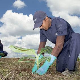 Chiquita loopt voorop als het gaat om het behoud van biodiversiteit