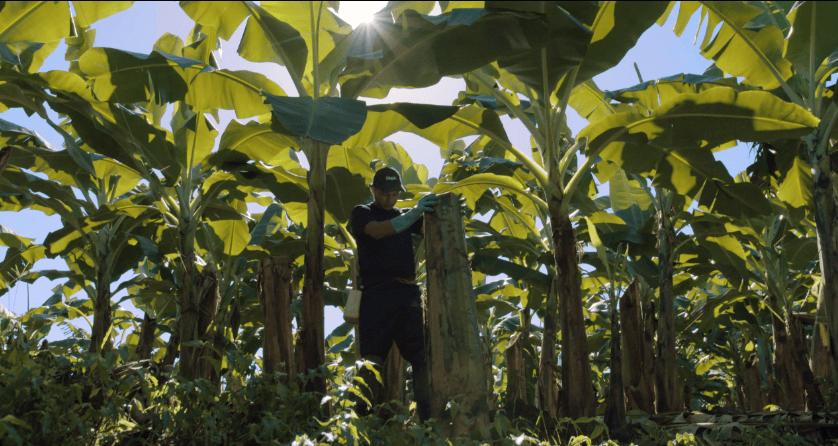 Duurzame_landbouw