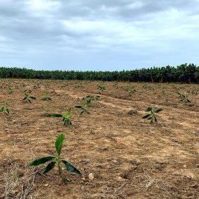 Il nostro impegno per un'agricoltura sostenibile